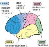 http://suzuran-maeyama.com/blog/%E5%89%8D%E9%A0%AD%E8%91%89.jpg