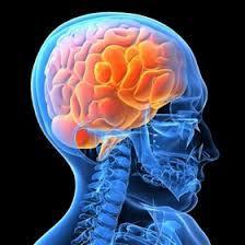 脳②.jpgのサムネール画像