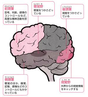 脳の興奮②.jpg